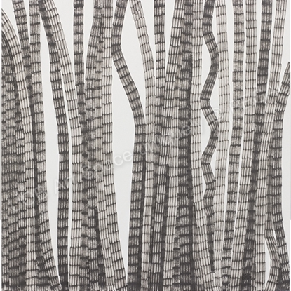 Picture of Air Roots - Yoko Choi